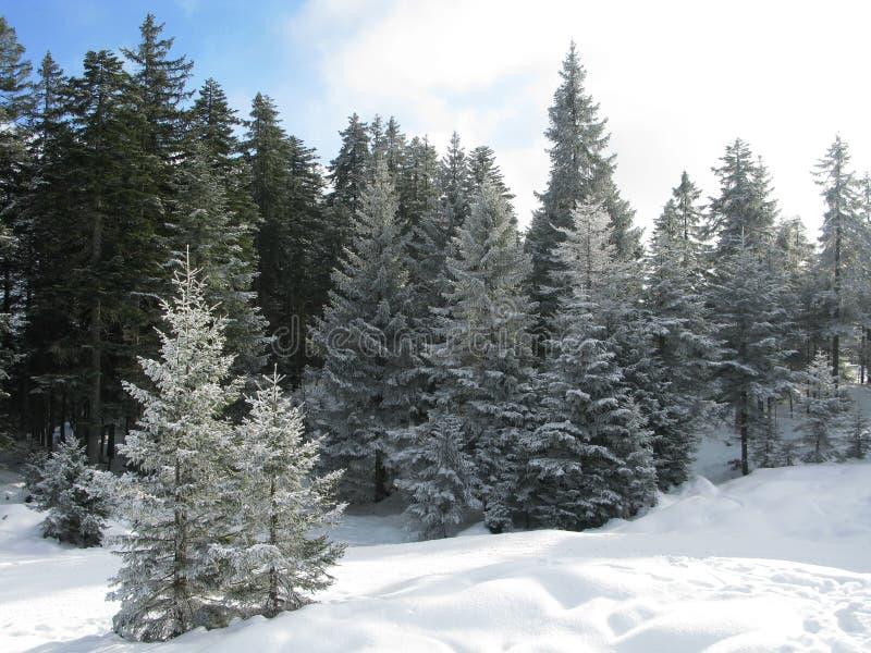 skida för alps royaltyfri fotografi
