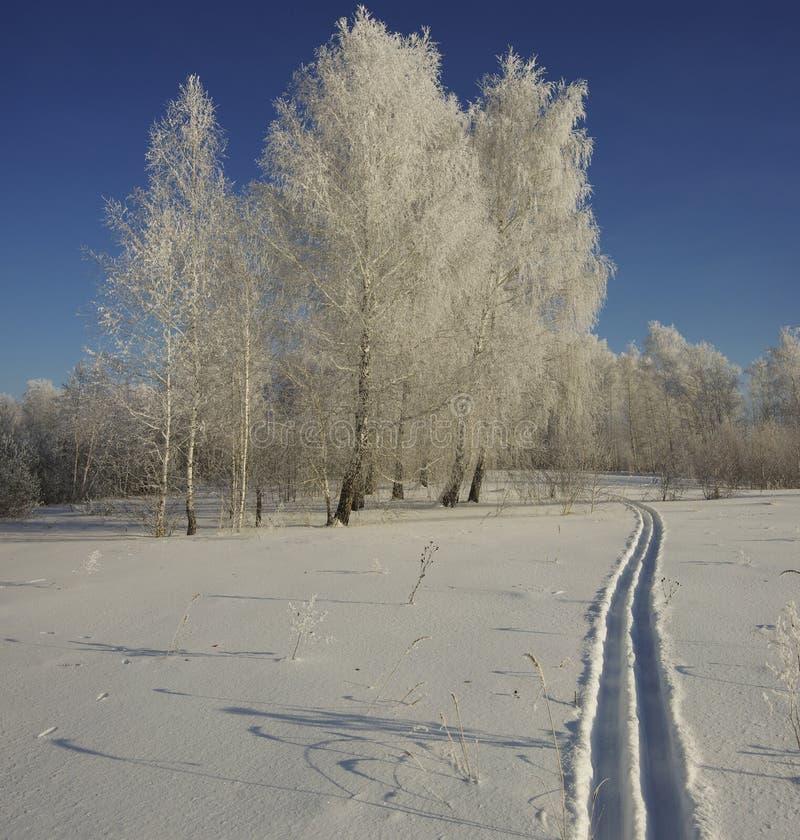 Skida i djupt insnöat en vinterskog på en solig dag arkivfoto