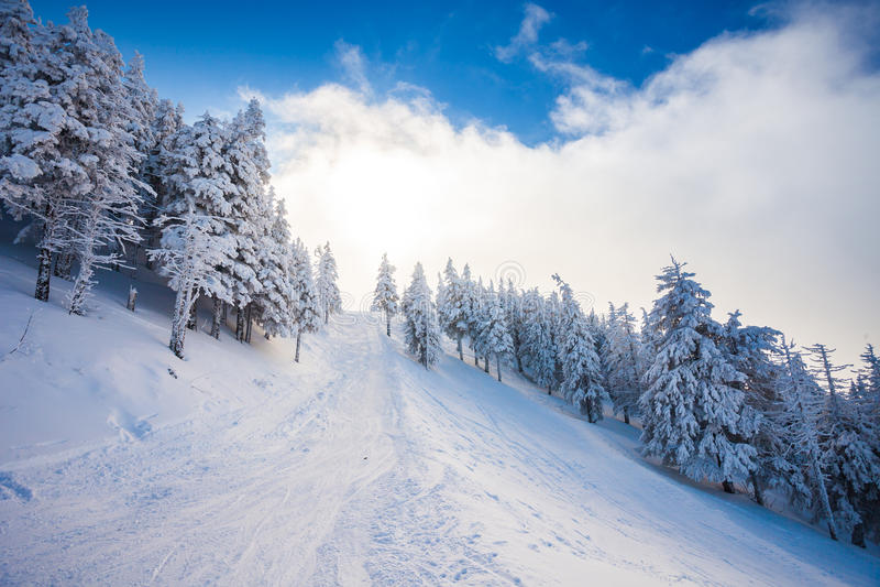 Skidar skogbanan med sörjer träd som täckas i snö fotografering för bildbyråer