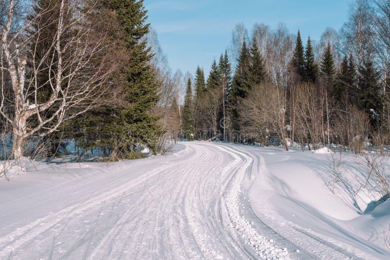 Skidar slingan i skogen Traasa i vinterskogen vägen för att gå till och med vinterskogen Taiga i vintern spår royaltyfri fotografi