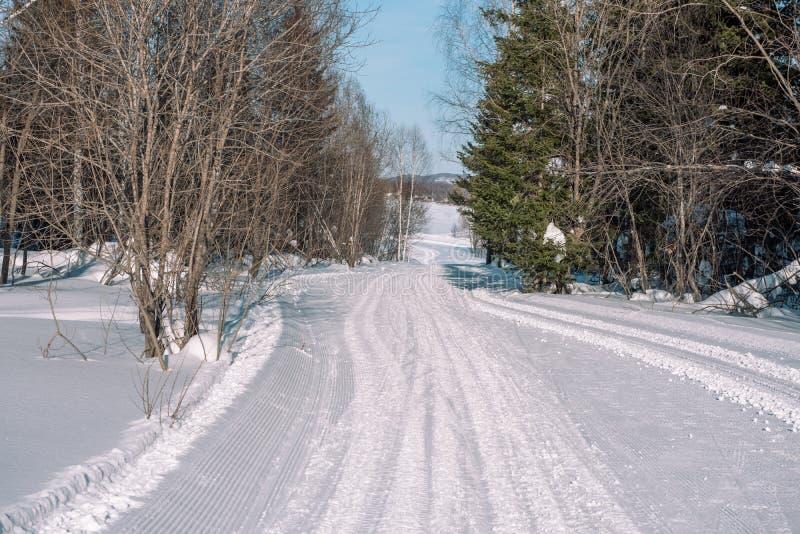 Skidar slingan i skogen Traasa i vinterskogen vägen för att gå till och med vinterskogen Taiga i vintern spår royaltyfri foto