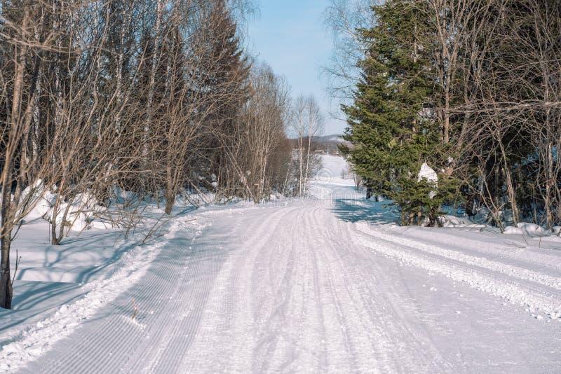 Skidar slingan i skogen Traasa i vinterskogen vägen för att gå till och med vinterskogen Taiga i vintern spår royaltyfria bilder
