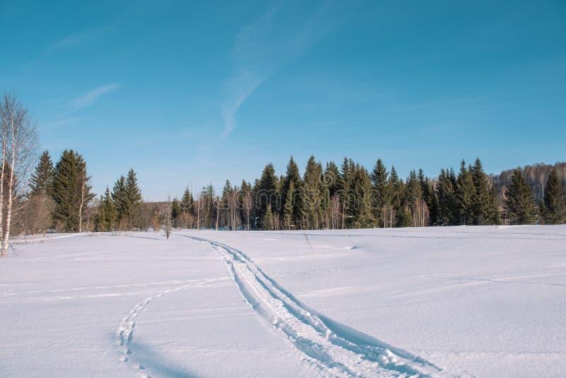 Skidar slingan i skogen Traasa i vinterskogen vägen för att gå till och med vinterskogen Taiga i vintern spår fotografering för bildbyråer