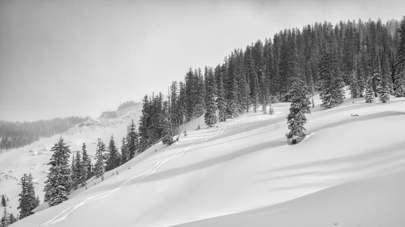 Skidar spår i backcountry Jackson Hole royaltyfri fotografi