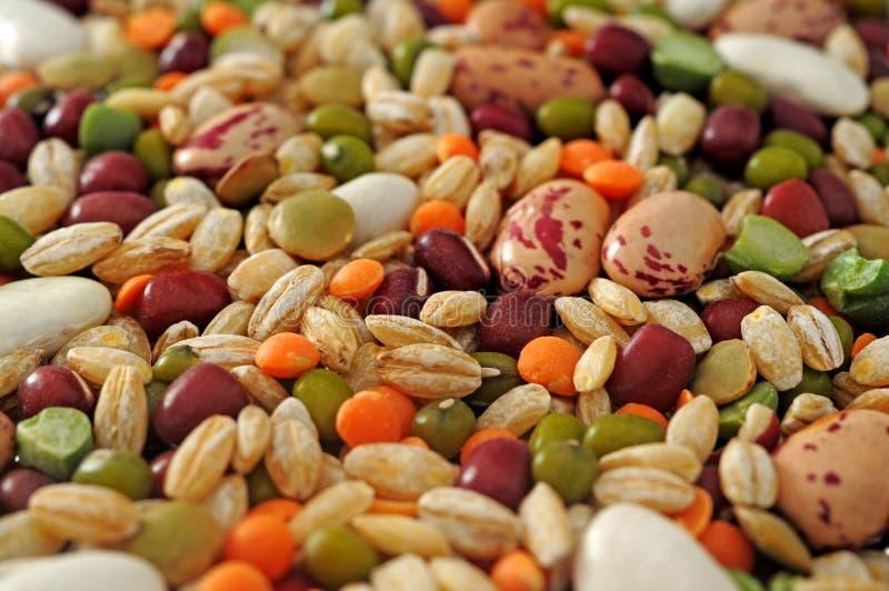Skidfrukter och sädesslag royaltyfria bilder