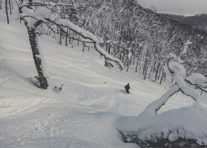 Skier skiing deep powder in snowy forest royalty free stock photos