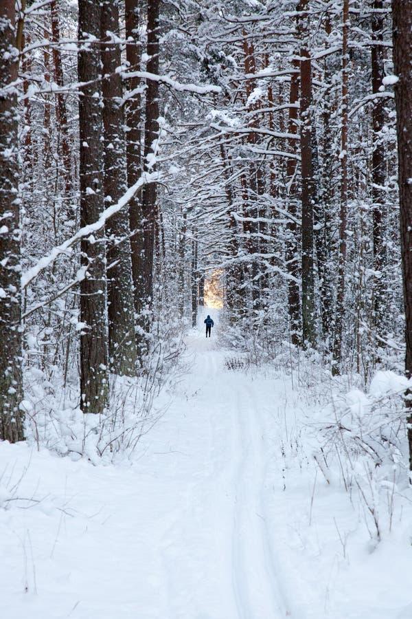 Skieur dans la forêt d'hiver photographie stock