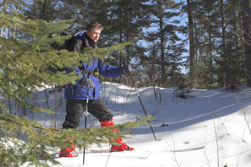 Skieur dans le taiga images libres de droits