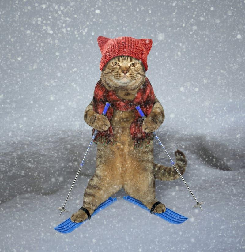 Skieur de chat dans la neige photo stock