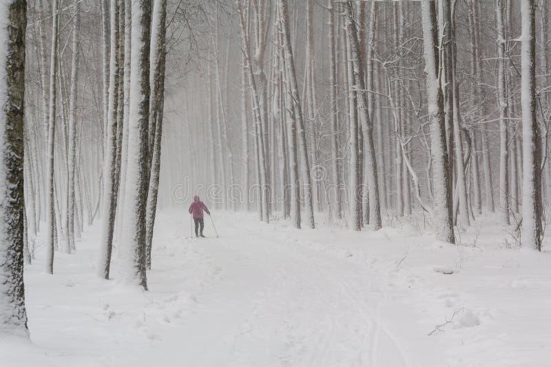 Skieur solitaire en parc couvert de neige photo libre de droits