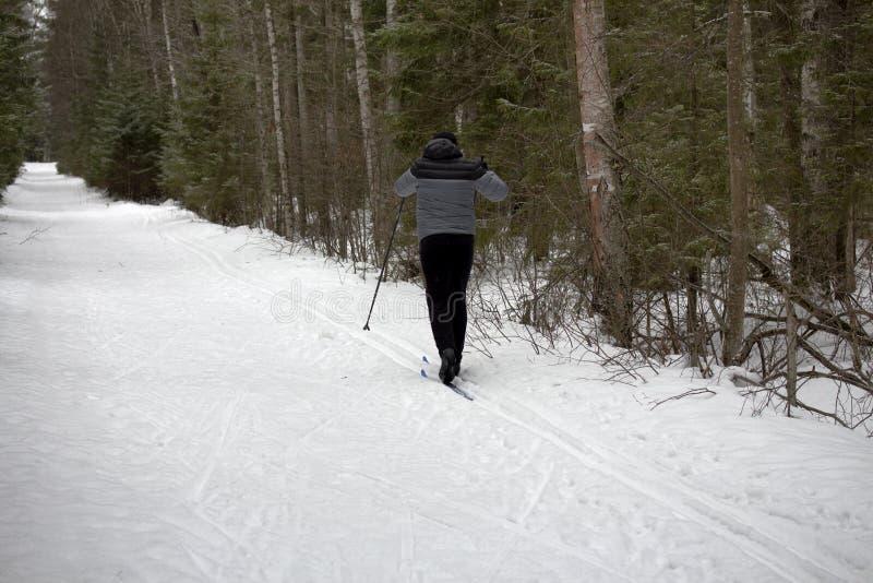 Skifahrer im Wald lizenzfreie stockfotografie
