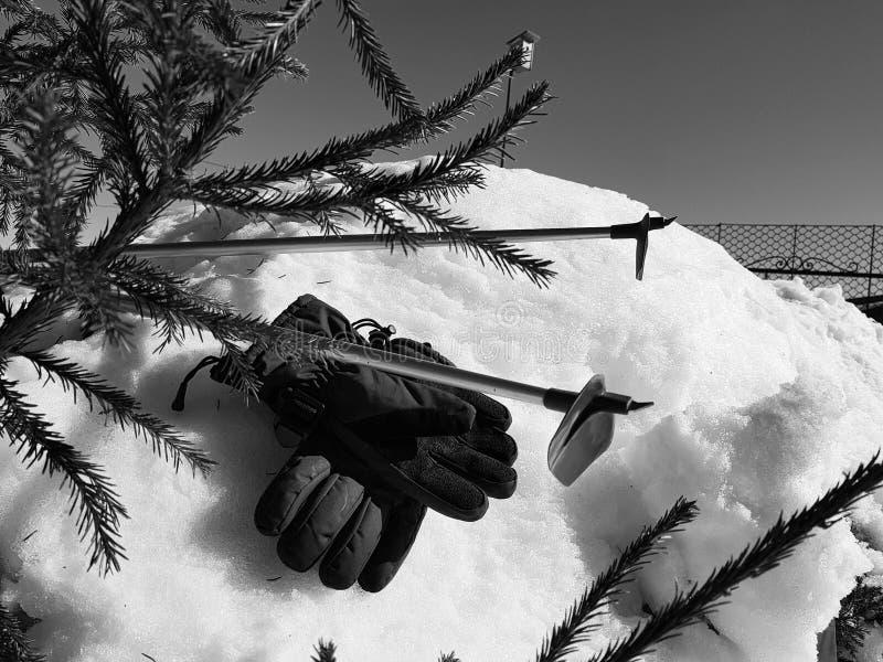 Skihandschuhe, Skis und Skipfosten im Schnee unter dem Baum im Winter oder im Frühling lizenzfreies stockfoto