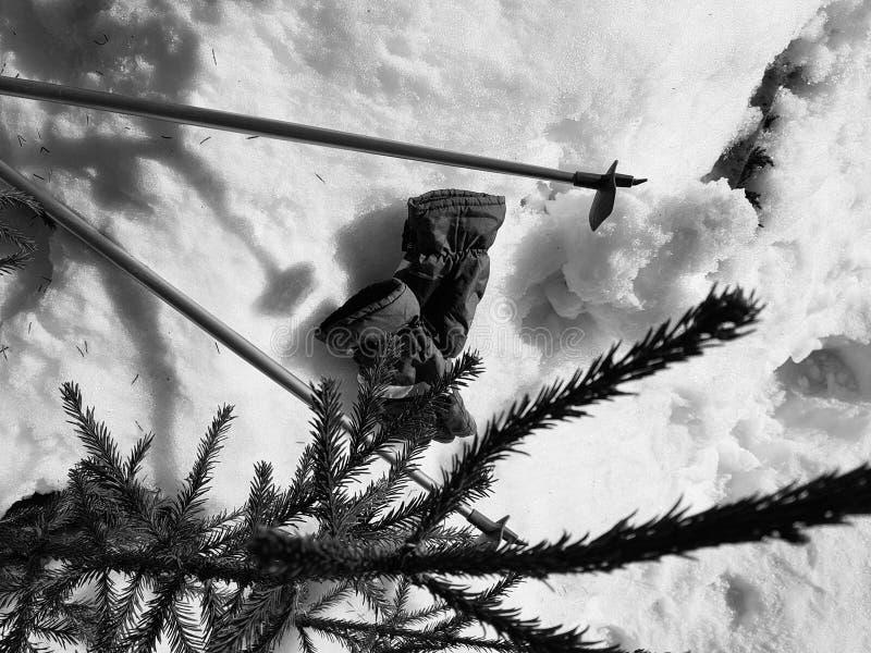 Skihandschuhe, Skis und Skipfosten im Schnee unter dem Baum im Winter oder im Fr?hling stockbilder