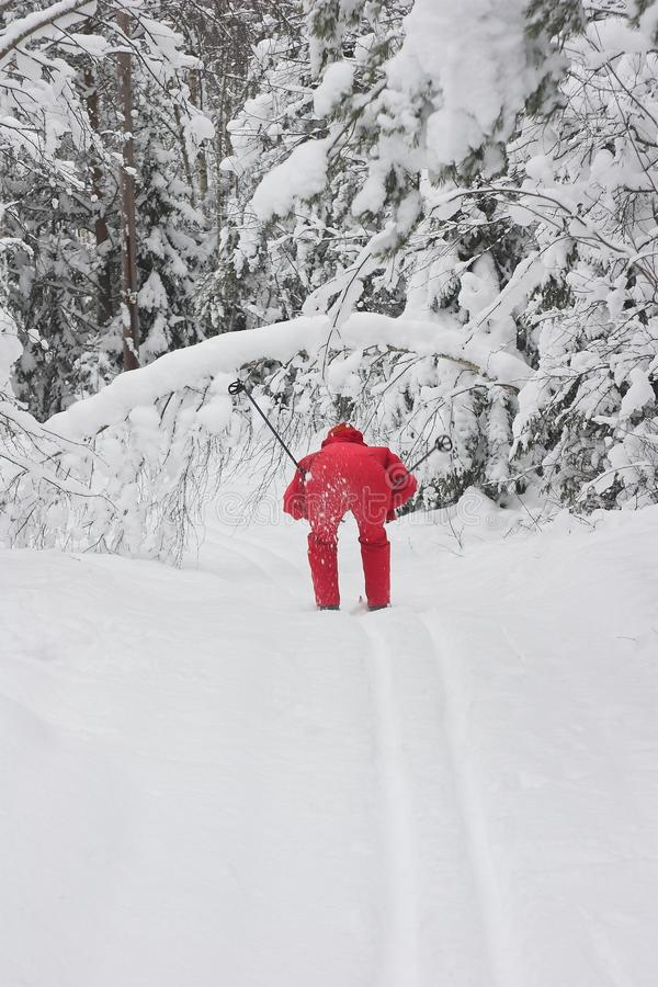 Skiing in forest royalty free stock photography