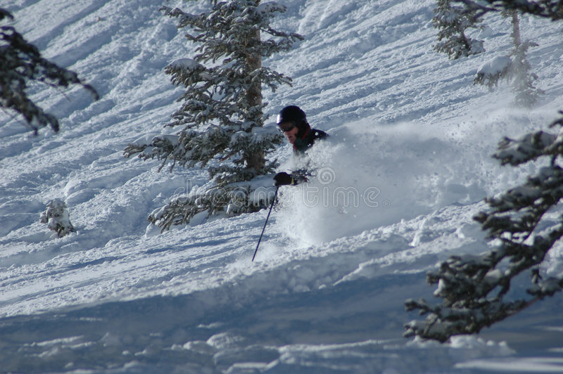 Skiing in the powder royalty free stock photography