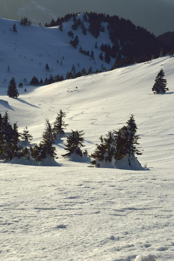 Skikurven im Schnee bei Sonnenuntergang stockfotografie