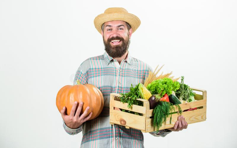 Skillful farm worker presenting his work. man with rich autumn crop. bearded mature farmer. organic natural food. happy. Halloween. seasonal vitamin food stock image