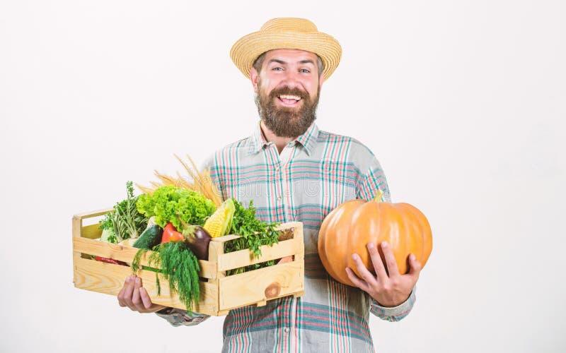 Skillful farm worker presenting his work. man with rich autumn crop. bearded mature farmer. organic natural food. happy. Halloween. seasonal vitamin food stock images