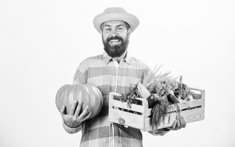 Skillful farm worker presenting his work. man with rich autumn crop. bearded mature farmer. organic natural food. happy. Halloween. seasonal vitamin food stock photography