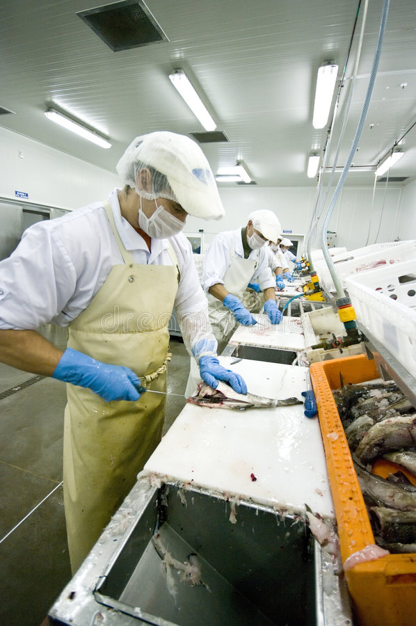 Skillful fish cutter royalty free stock photos