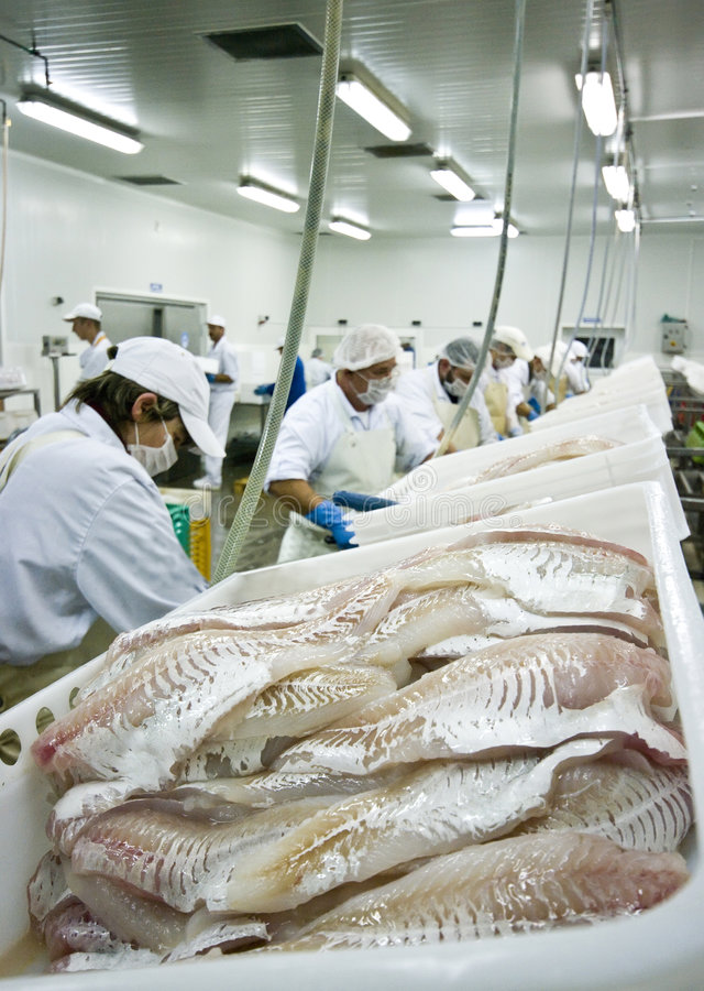 Skillful fish cutters stock images