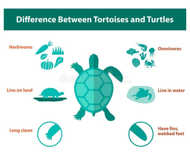 Skillnad mellan sköldpaddor och sköldpaddor, vektor royaltyfri illustrationer