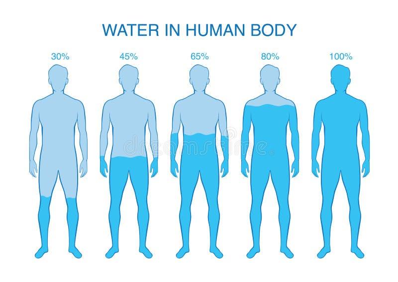 Skillnadprocentsats av vatten i människokroppen royaltyfri illustrationer