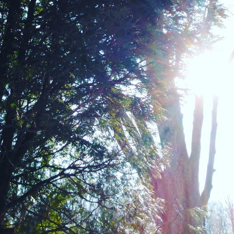 Skimrande solsken arkivbilder