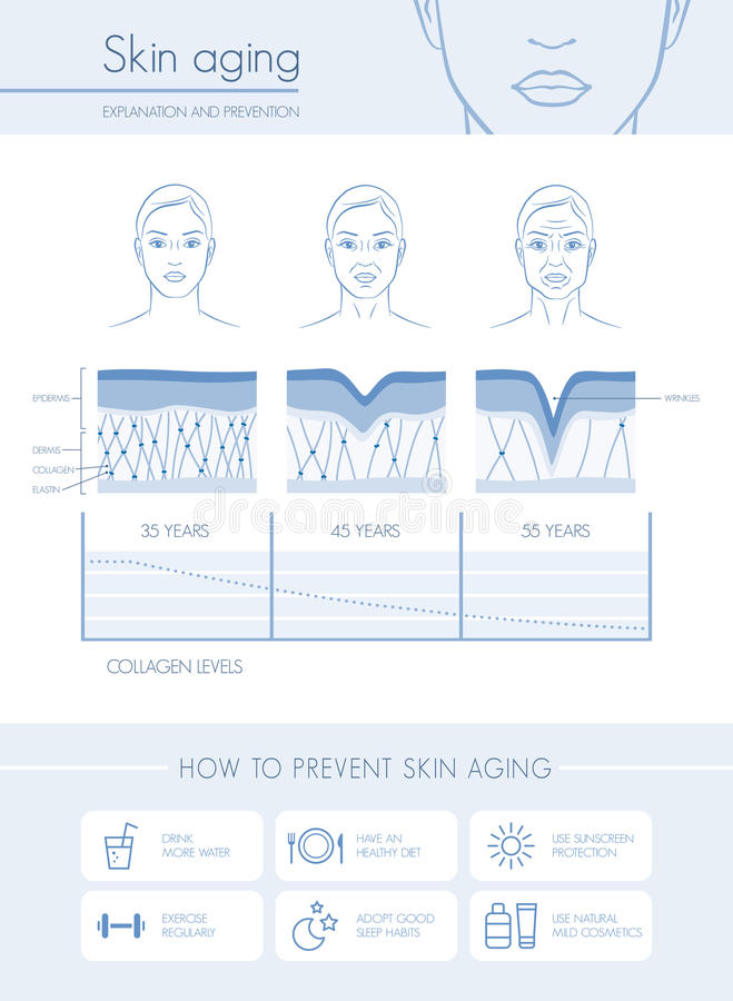 Skin aging. Diagrams and stages, anti aging prevention tips and female faces vector illustration