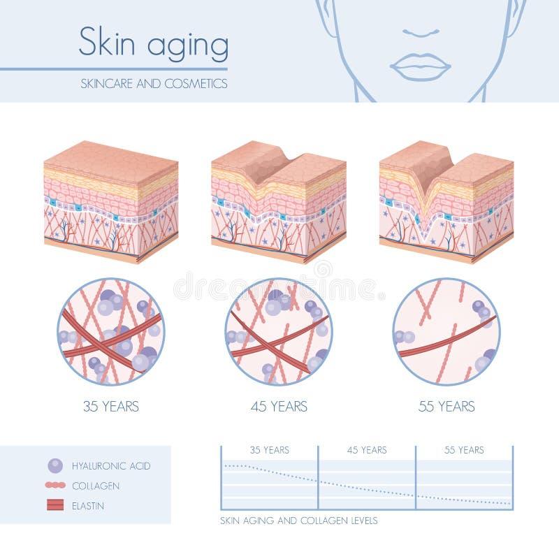 Skin aging royalty free illustration