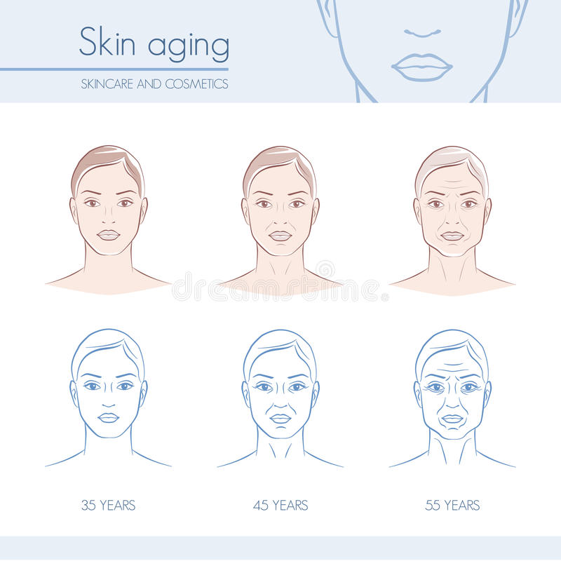 Skin aging. Stages on female faces, skincare and beauty infographic vector illustration