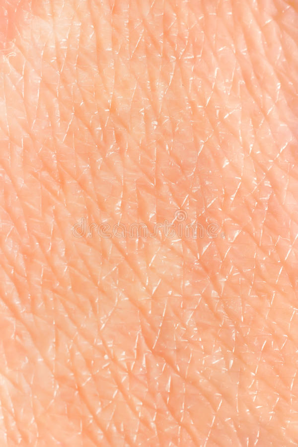 Download Skin Background Stock Images - Image: 22790464