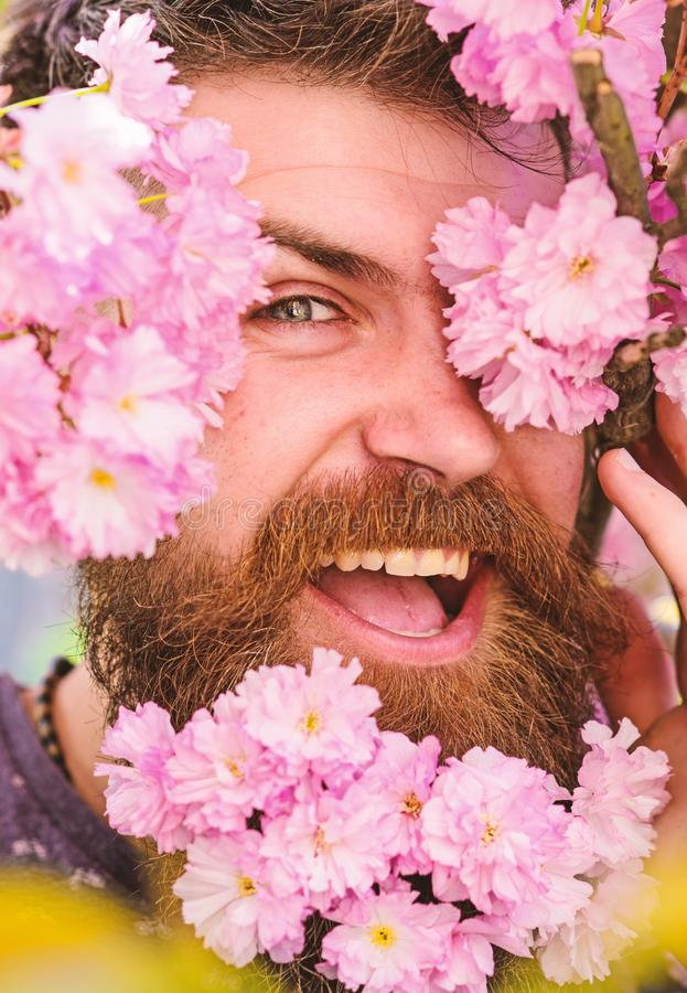 Skin care and hair care concept. Bearded male face peeking out of bloom of sakura. Hipster with sakura blossom in beard. Man with beard and mustache on happy stock photos