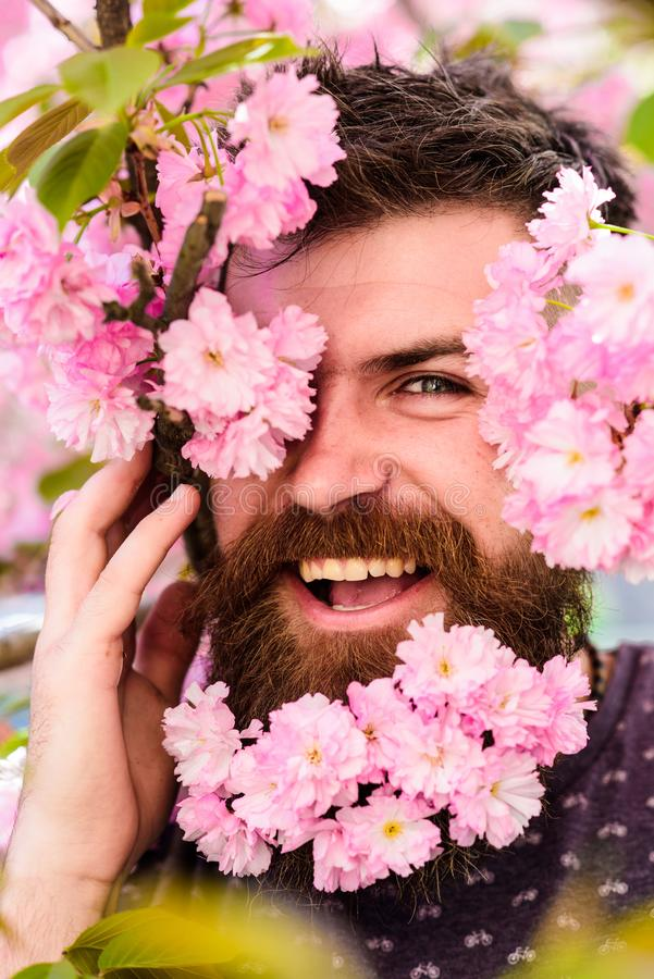 Skin care and hair care concept. Bearded male face peeking out of bloom of sakura. Man with beard and mustache on happy. Face near tender pink flowers, close up stock image