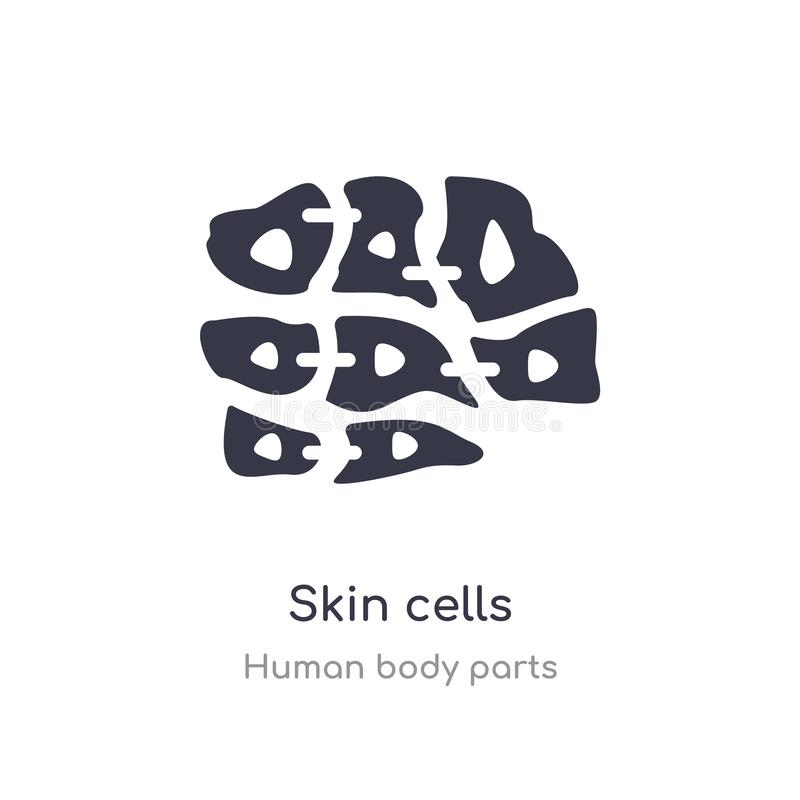 Skin cells outline icon. isolated line vector illustration from human body parts collection. editable thin stroke skin cells icon. On white background vector illustration