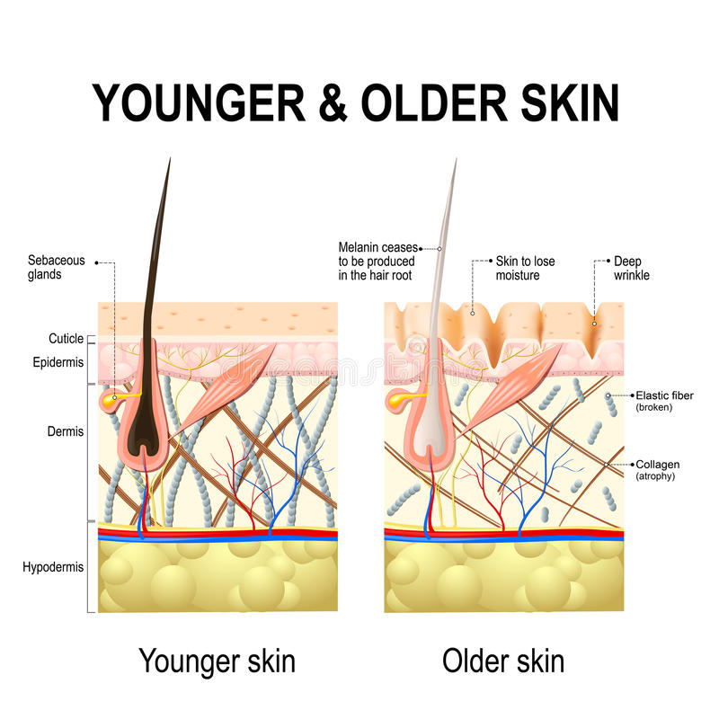 Skin changes or ageing skin. stock illustration