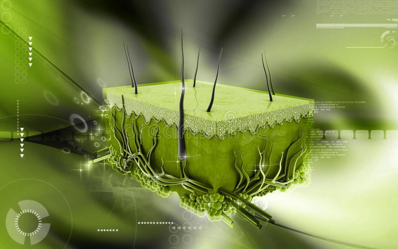 Skin. Digital illustration of Skin in colour background vector illustration