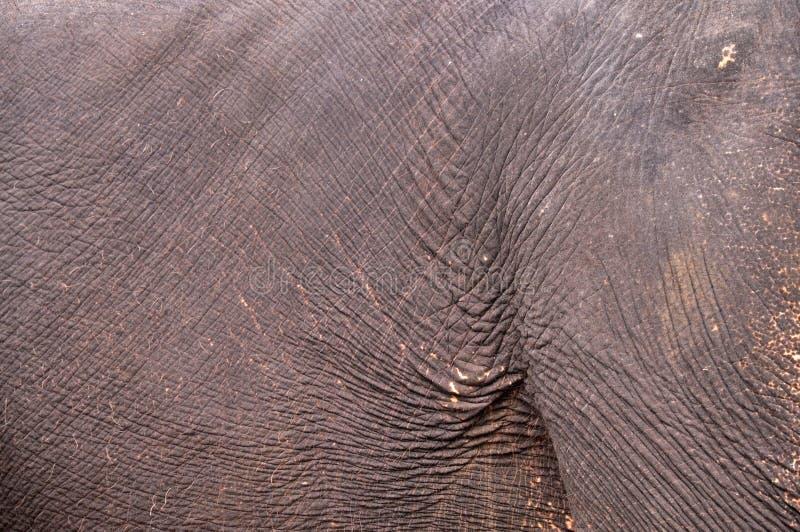 Download Skin elephant stock photo. Image of male, strength, samui - 27335302