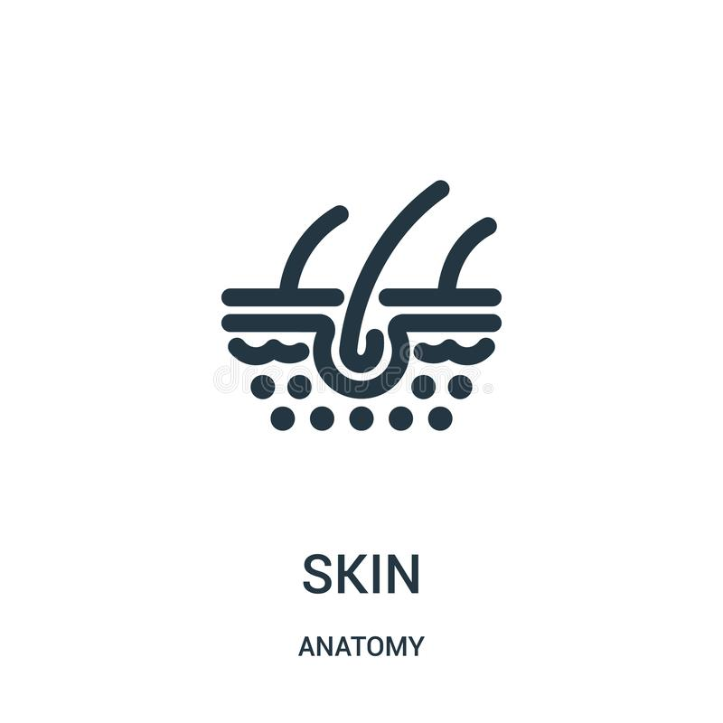 Diagram  A Labeled Diagram Of The Cross Section Of The Skin Full Version Hd Quality The Skin