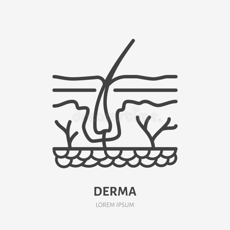 Skin layer flat line icon. Vector thin pictogram of human epidermis, outline illustration for dermatology clinic royalty free illustration