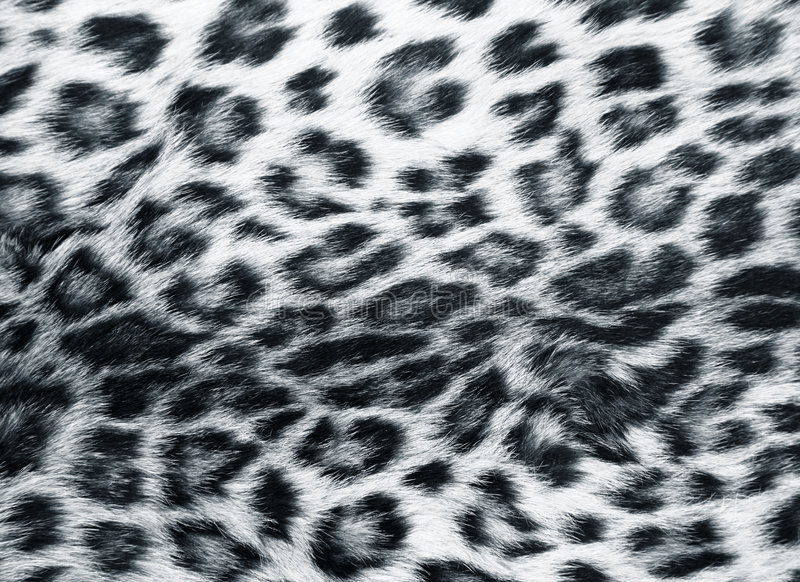 Skin of the leopard stock image