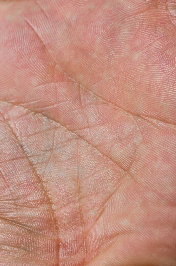 Download Skin macro stock image. Image of callus, clairvoyance - 15157973
