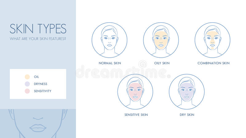 Skin types vector illustration