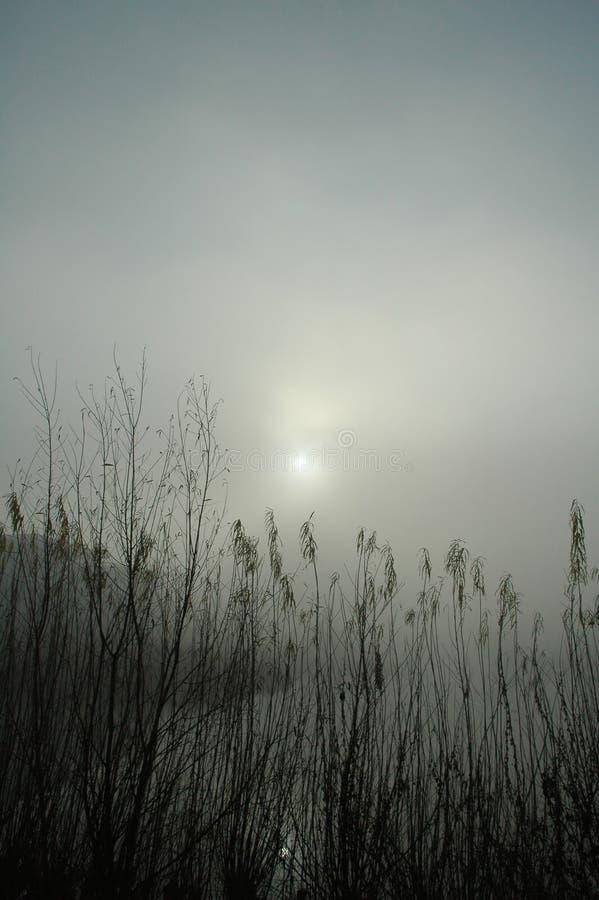 Download Skina fotografering för bildbyråer. Bild av grått, scape - 159691