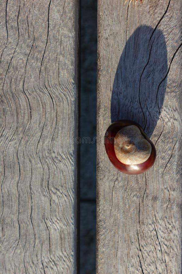 skinande brun kastanj på vit bakgrund av trätabellen arkivbild
