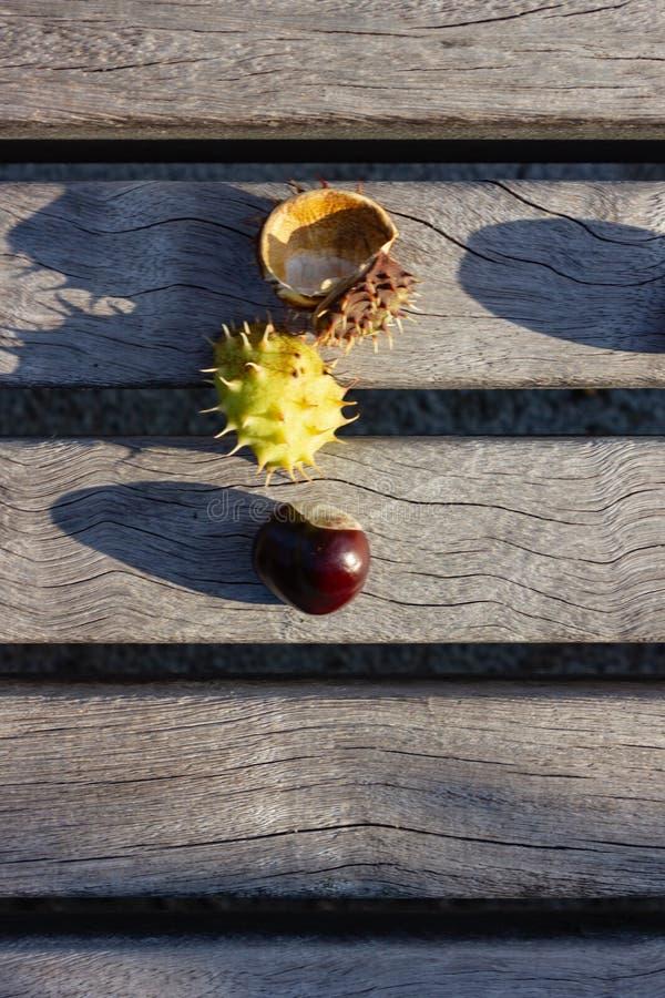 skinande brun kastanj på vit bakgrund av trätabellen arkivfoton