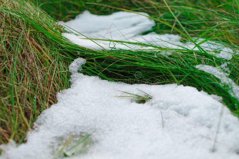 Skinande klara droppar av en meltsnö bevattnar att falla från ett saftigt grönt gräs fotografering för bildbyråer