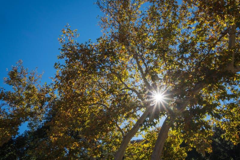 Skinande solskenljus i trän royaltyfri foto