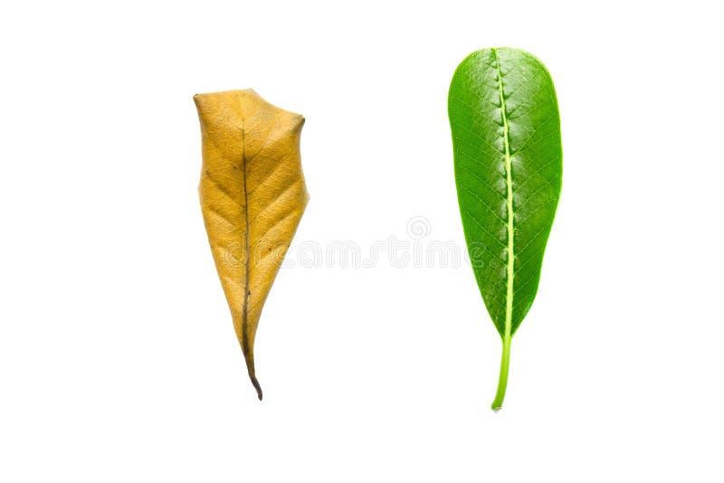 skincare和老化成长润湿的奶油,树le的概念 库存图片