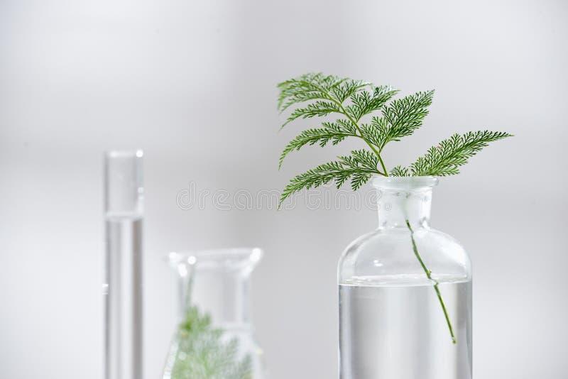 Skincare cosmetico della natura e aromaterapia dell'olio essenziale organico immagine stock libera da diritti